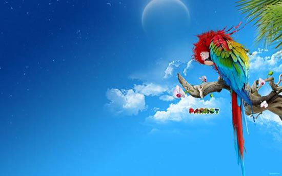 Stunning HD Wallpaper - Parrot