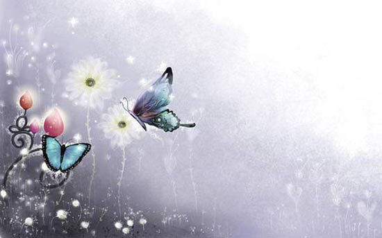Stunning HD Wallpaper - Butterfuly