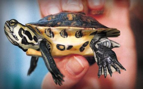 Turtle in The Ultimate Collection Of Maya 3D Tutorials