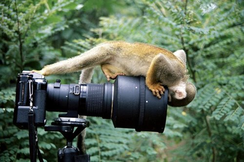 Perfectly Timmed Photography