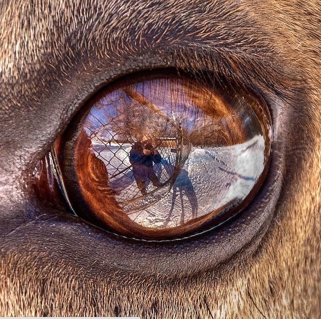 animal eyes photos
