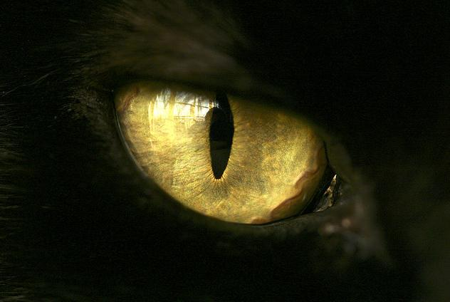 animal eye photo