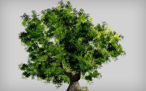 Realistic-Tree in The Ultimate Collection Of Maya 3D Tutorials