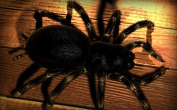 Tarantula in The Ultimate Collection Of Maya 3D Tutorials
