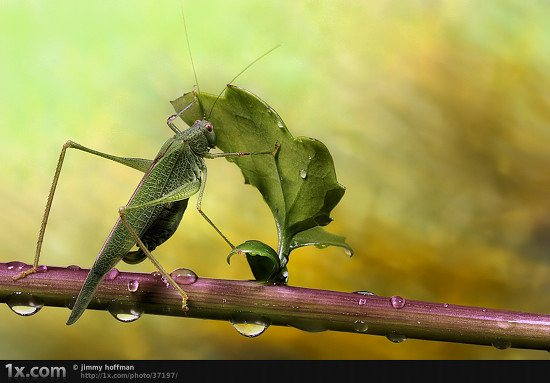 05 37197 Unbelievably Outstanding and Colorful Insects Macro Photography