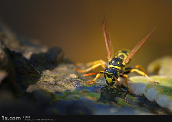 08 34001 Unbelievably Outstanding and Colorful Insects Macro Photography