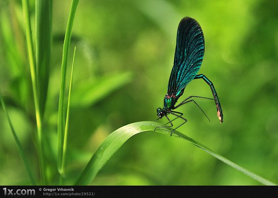 12 29521 Unbelievably Outstanding and Colorful Insects Macro Photography