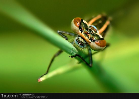 15 27581 Unbelievably Outstanding and Colorful Insects Macro Photography