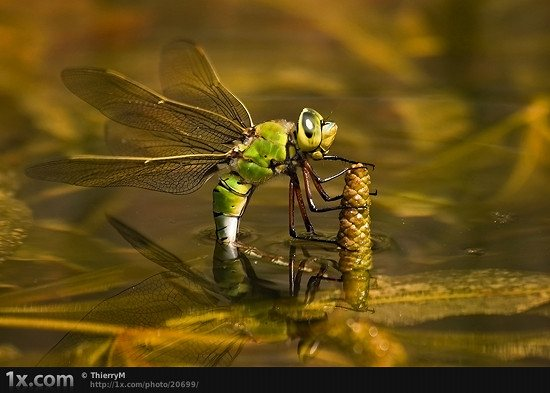 24 20699 Unbelievably Outstanding and Colorful Insects Macro Photography