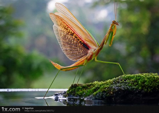 29 38571 Unbelievably Outstanding and Colorful Insects Macro Photography