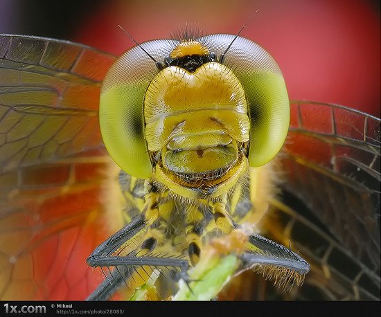 32 28085 Unbelievably Outstanding and Colorful Insects Macro Photography