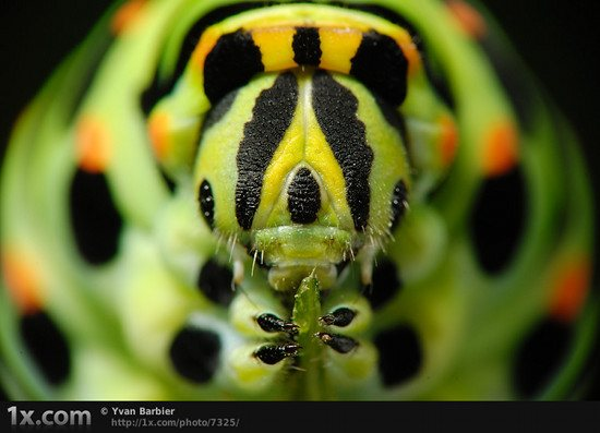 41 7325 Unbelievably Outstanding and Colorful Insects Macro Photography