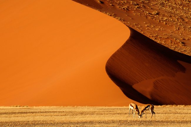 Namib Wonderland Landscape Photography   Real ?