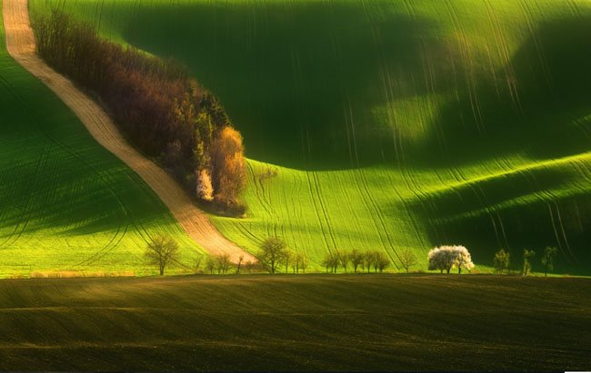 Spring On Fields Wonderland Landscape Photography   Real ?