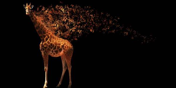 How To Make A Musical Giraffe Digital Illustration 50+ Latest Photo Manipulation Tutorials in Photoshop