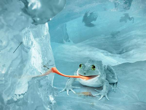 Create a Fictional Arctic Snow Frog in Photoshop in 30 New Photo Manipulation Tutorials